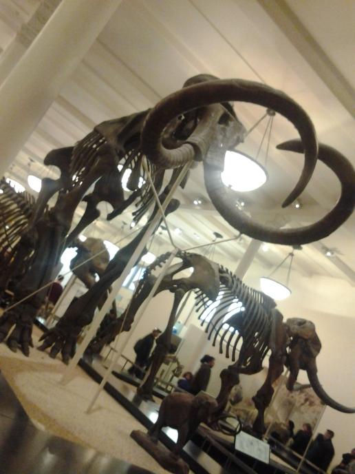 Ya… les prometo que esta es la última foto de dinosaurios que pongo